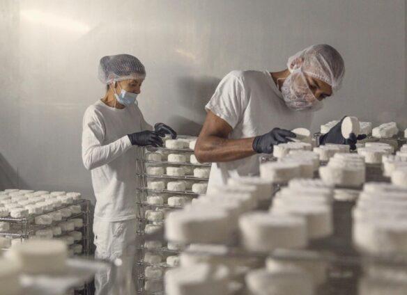 Swiss startups driving vegan innovation